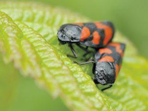 Putukavõrgud - praktilisemad ja diskreetsemad kui kunagi enne